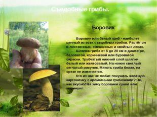 Съедобные грибы. Боровик   Боровик или белый гриб - наибол