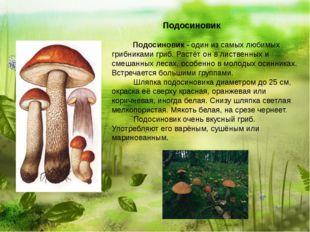 Подосиновик  Подосиновик - один из самых любимых грибниками гриб. Р
