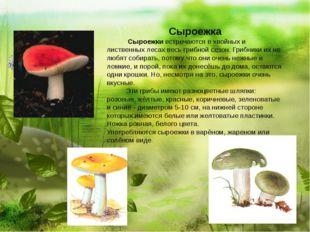Сыроежка  Сыроежки встречаются в хвойных и лиственных лесах весь г