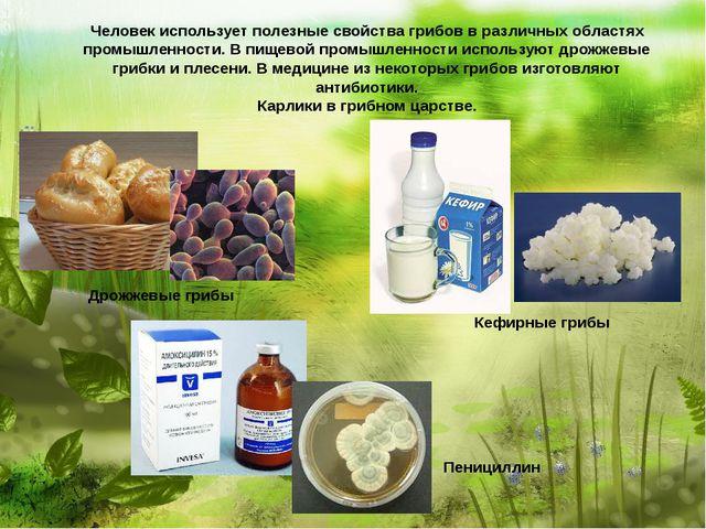 Человек использует полезные свойства грибов в различных областях промышленно...