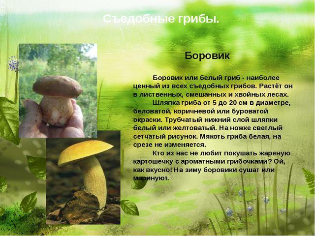 Съедобные грибы. Боровик   Боровик или белый гриб - наибол...