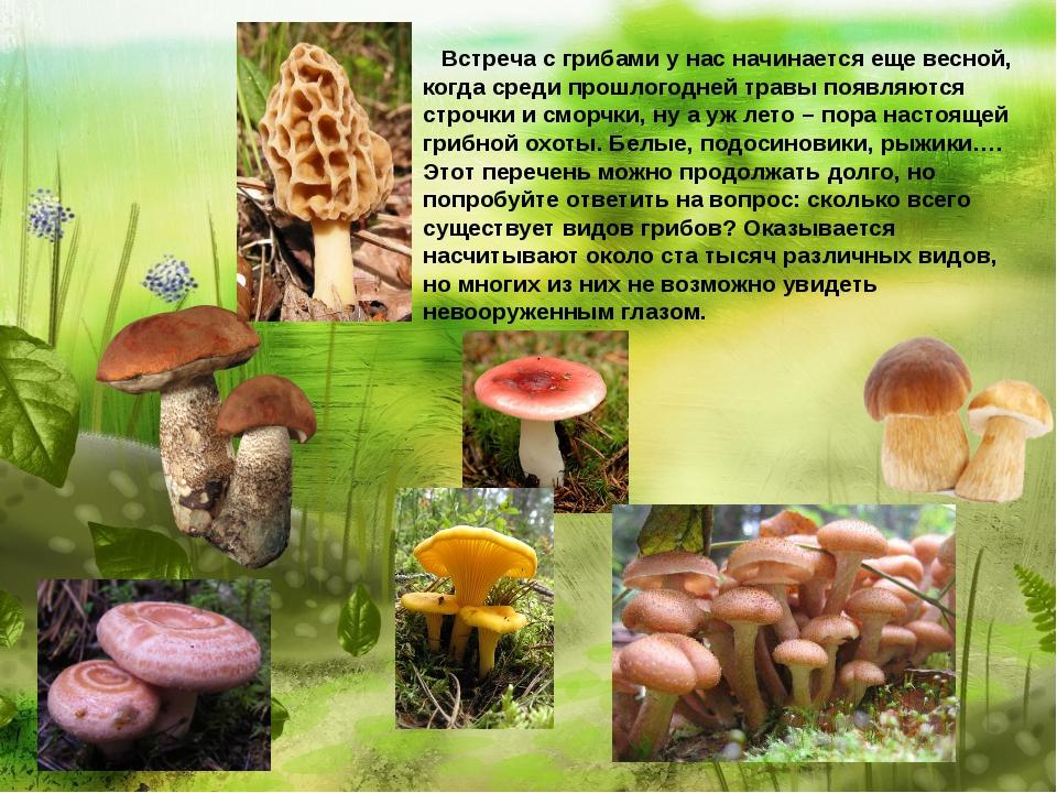 Встреча с грибами у нас начинается еще весной, когда среди прошлогодней трав...