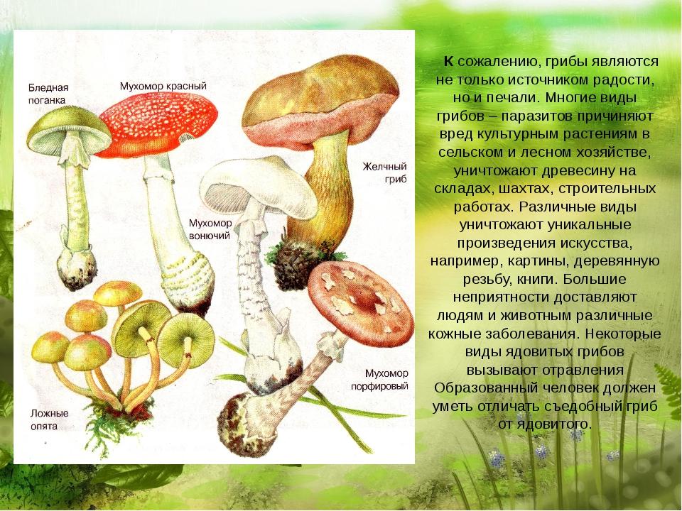 К сожалению, грибы являются не только источником радости, но и печали. Многи...