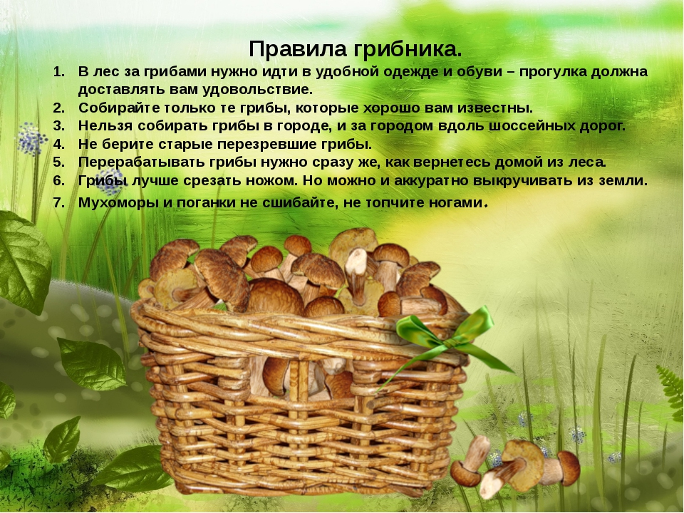 Правила грибника. В лес за грибами нужно идти в удобной одежде и обуви – про...