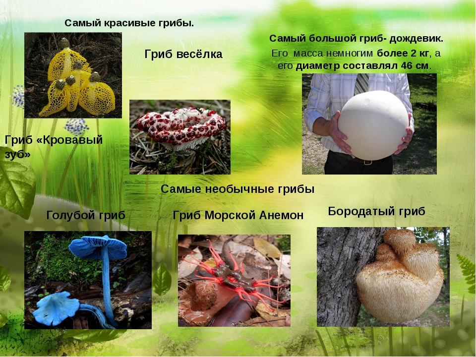 Самый красивые грибы. Самый большой гриб- дождевик. Его масса немногимболе...