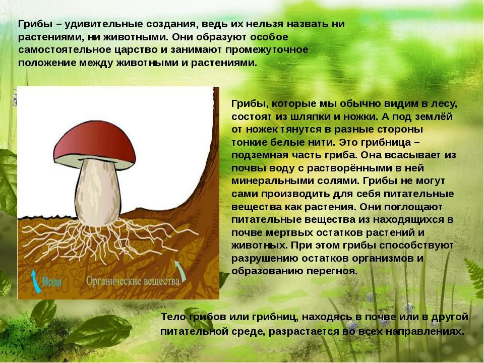 Грибы – удивительные создания, ведь их нельзя назвать ни растениями, ни живо...