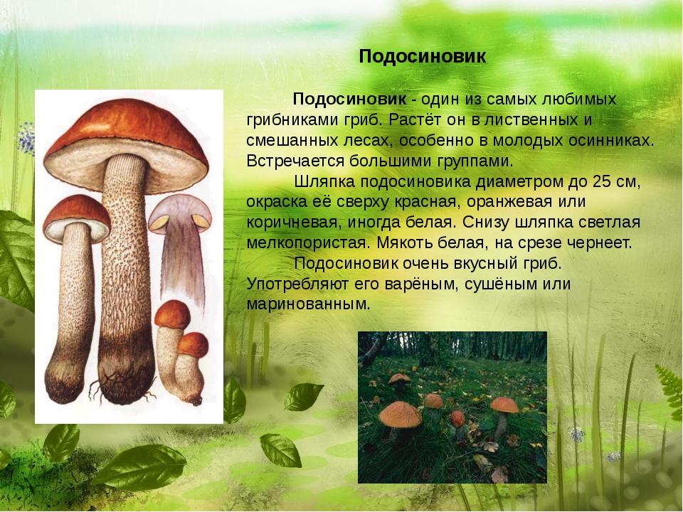 Подосиновик  Подосиновик - один из самых любимых грибниками гриб. Р...