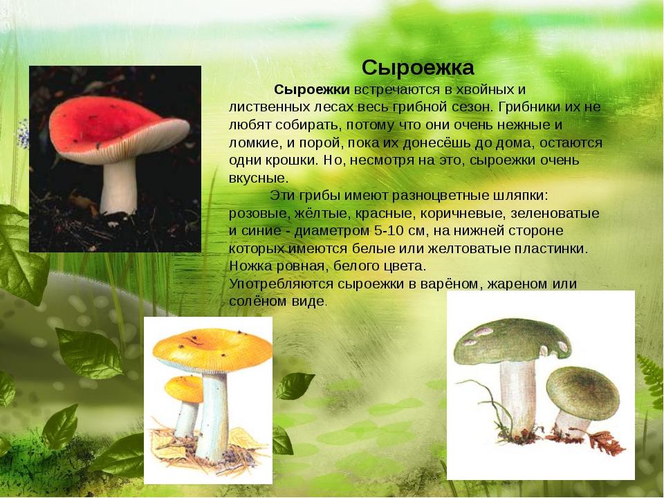 Сыроежка  Сыроежки встречаются в хвойных и лиственных лесах весь г...