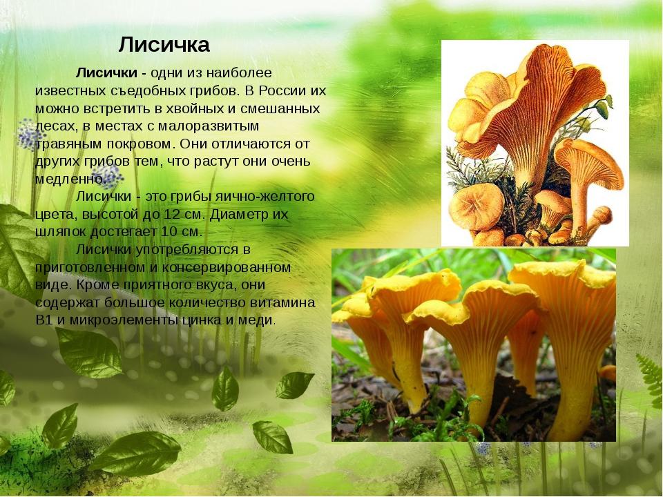 Лисичка   Лисички - одни из наиболее известных съедобных г...