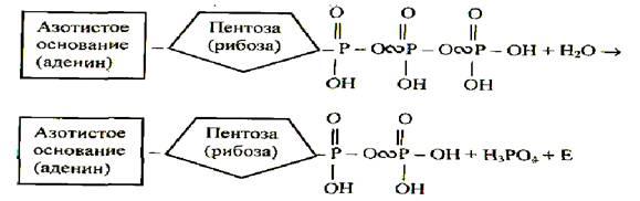 http://pandia.ru/text/78/037/images/image001_226.jpg