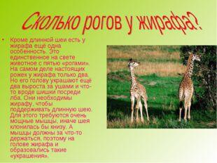 Кроме длинной шеи есть у жирафа ещё одна особенность. Это единственное на све