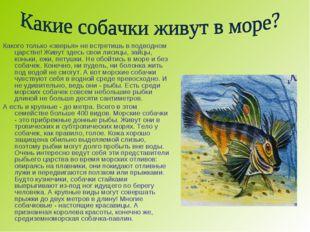 Какого только «зверья» не встретишь в подводном царстве! Живут здесь свои лис