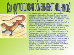 Песчаная кругоголовка - это маленькая ящерица (длиной не больше 8 сантиметро