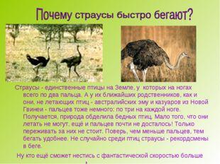 Страусы - единственные птицы на Земле, у которых на ногах всего по два пальц