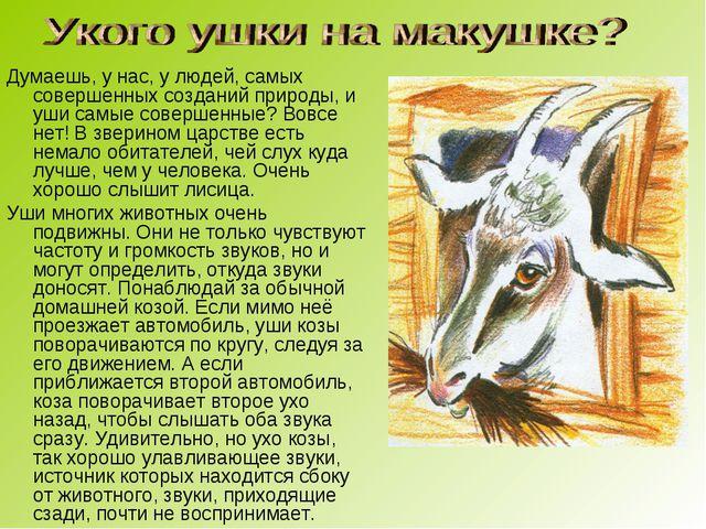 Думаешь, у нас, у людей, самых совершенных созданий природы, и уши самые сове...