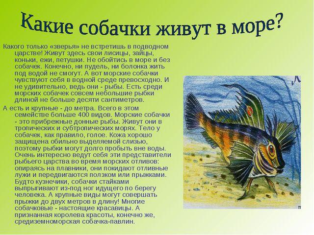 Какого только «зверья» не встретишь в подводном царстве! Живут здесь свои лис...