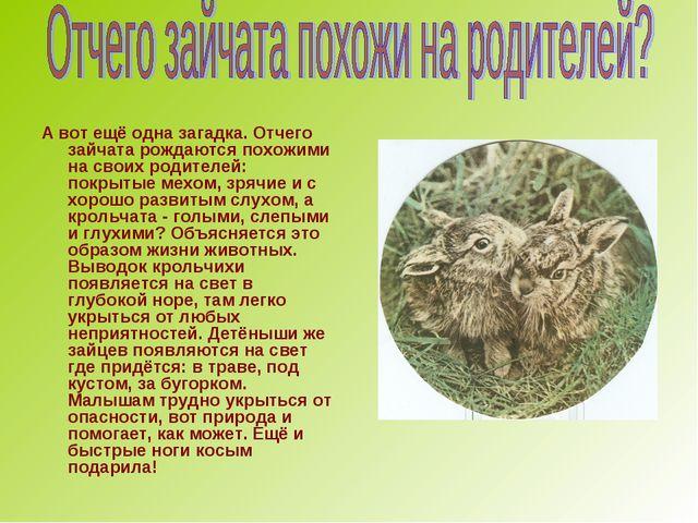 А вот ещё одна загадка. Отчего зайчата рождаются похожими на своих родителей:...