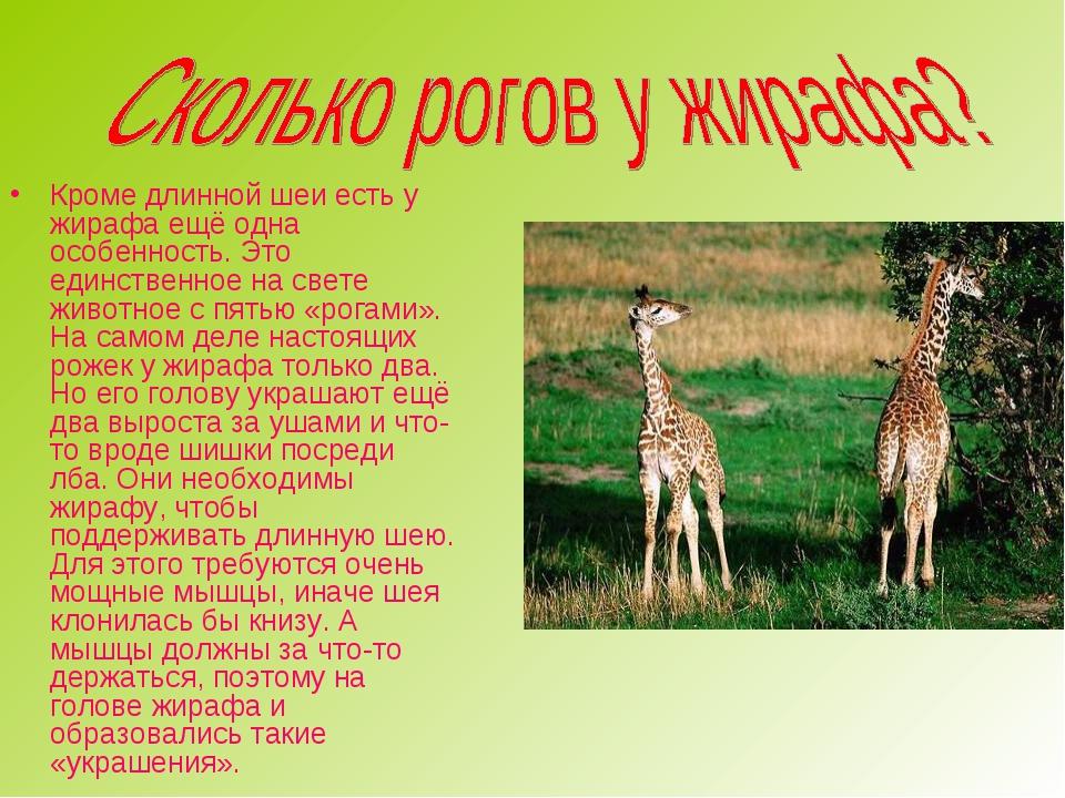 Кроме длинной шеи есть у жирафа ещё одна особенность. Это единственное на све...
