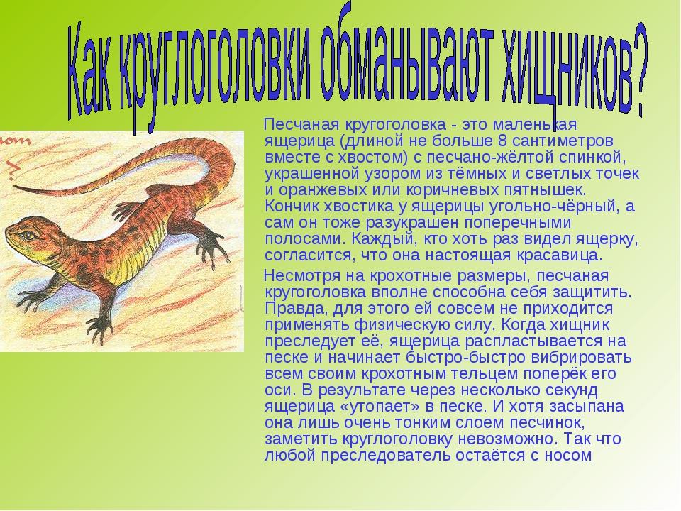Песчаная кругоголовка - это маленькая ящерица (длиной не больше 8 сантиметро...