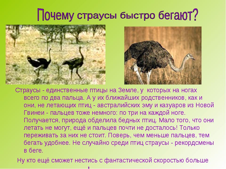 Страусы - единственные птицы на Земле, у которых на ногах всего по два пальц...