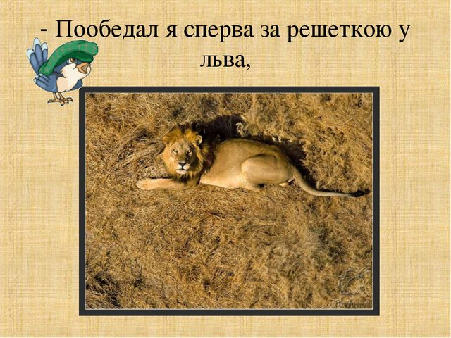 - Пообедал я сперва за решеткою у льва,
