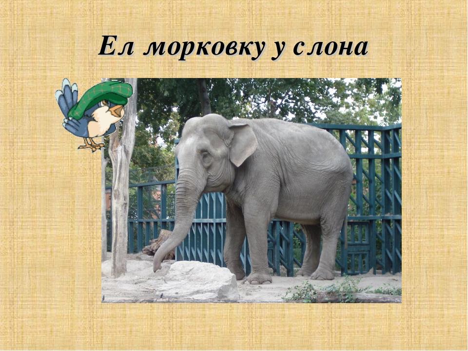 Ел морковку у слона