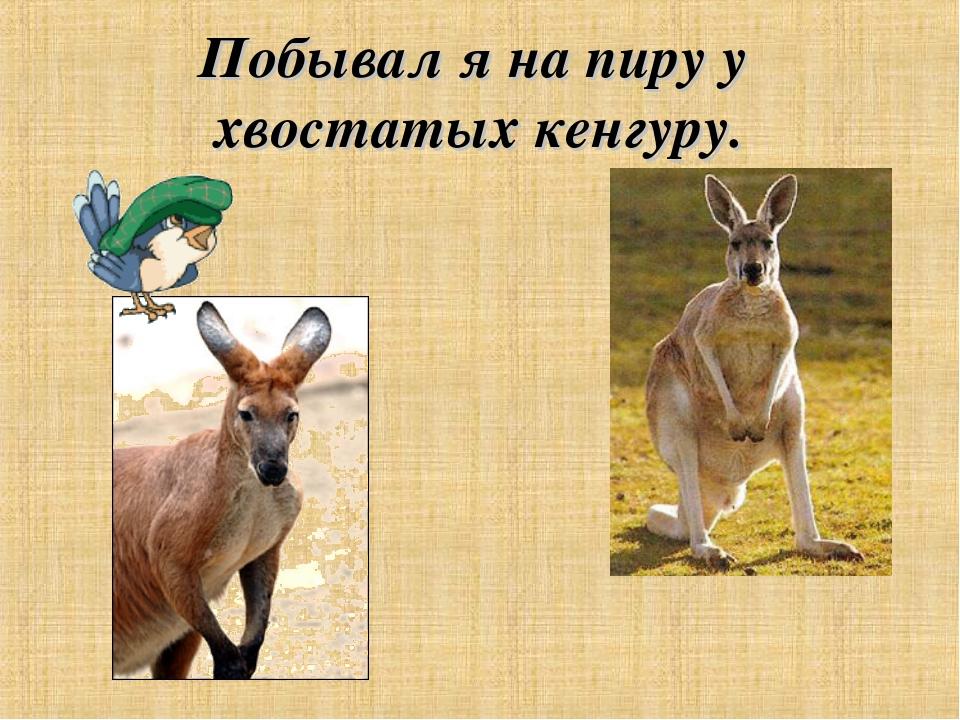 Побывал я на пиру у хвостатых кенгуру.