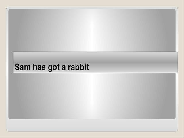 Sam has got a rabbit
