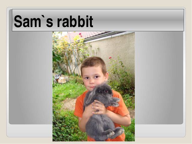 Sam`s rabbit