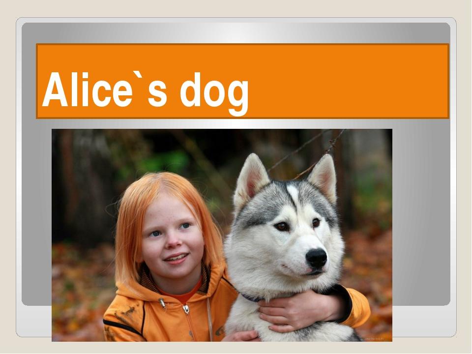 Alice`s dog