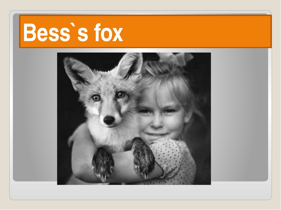 Bess`s fox