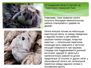 В Самарской области обитает на территории Самарской Луки. Описание. Своё назв