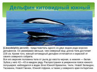 Дельфин китовидный южный (Lissodelphis peronii) - представитель одного из дву