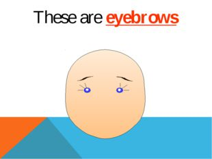 These are eyebrows