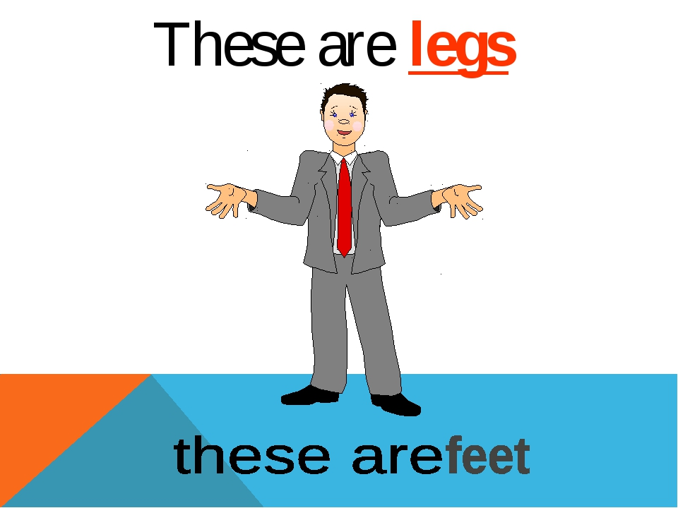 These are legs
