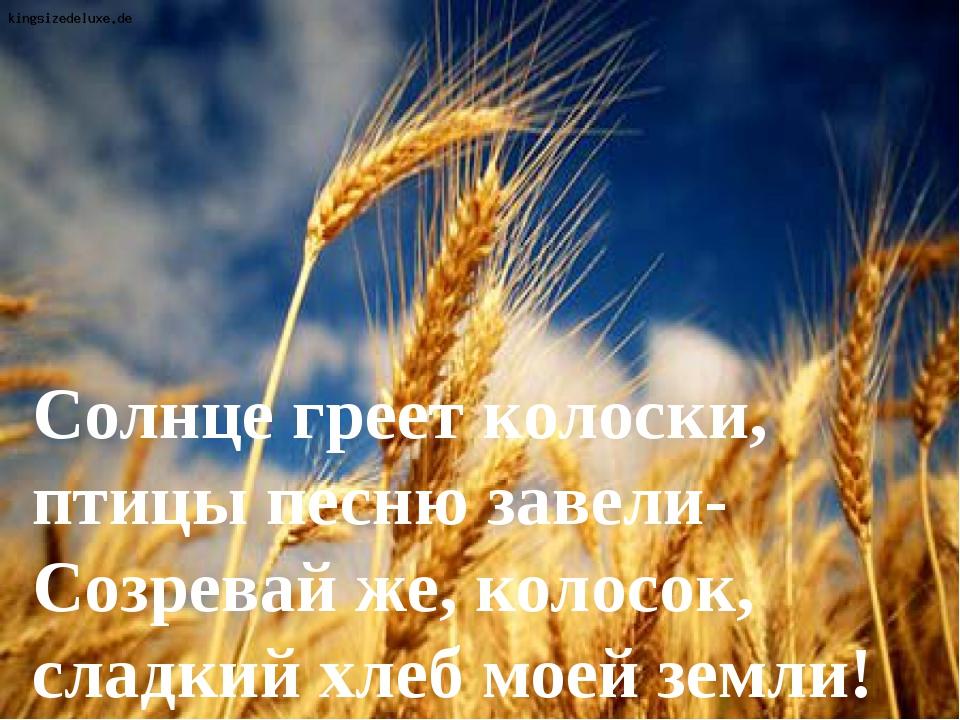 Солнце греет колоски, птицы песню завели- Созревай же, колосок, сладкий хлеб...