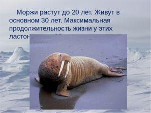 Моржи растут до 20 лет. Живут в основном 30 лет. Максимальная продолжительно