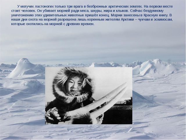 У могучих ластоногих только три врага в безбрежных арктических землях. На пе...