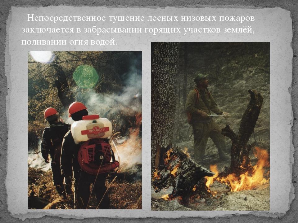 Непосредственное тушение лесных низовых пожаров заключается в забрасывании г...
