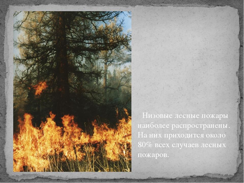 Низовые лесные пожары наиболее распространены. На них приходится около 80% в...