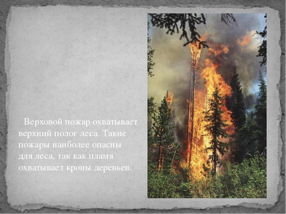 Верховой пожар охватывает верхний полог леса. Такие пожары наиболее опасны д...