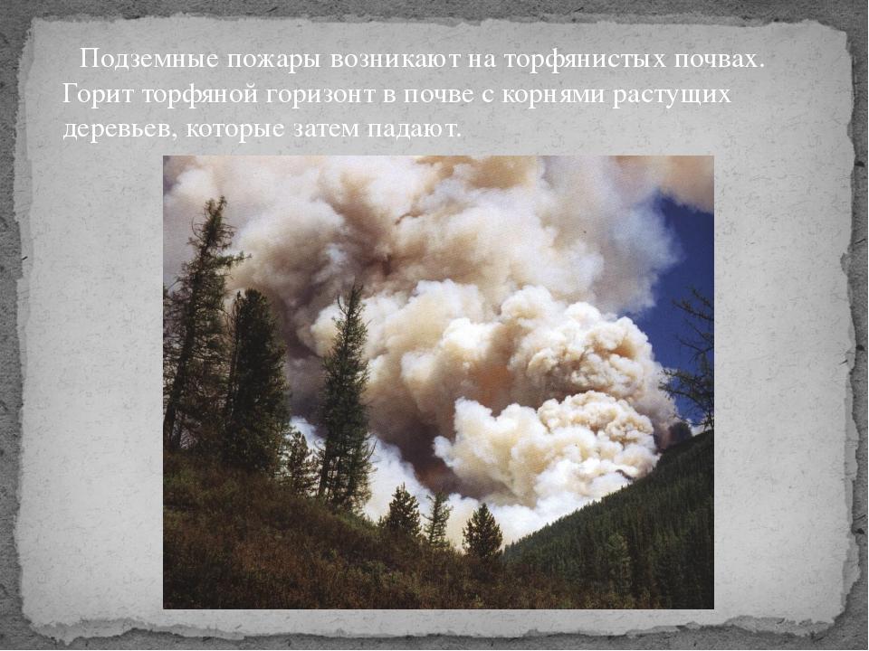 Подземные пожары возникают на торфянистых почвах. Горит торфяной горизонт в...