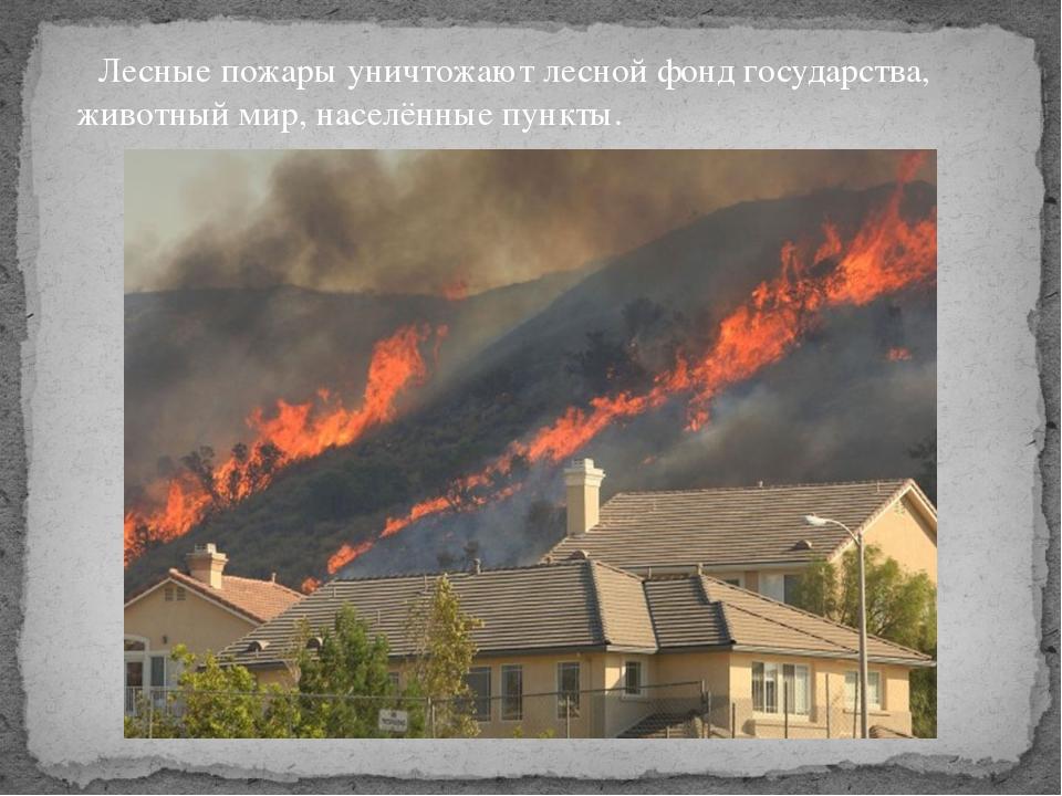Лесные пожары уничтожают лесной фонд государства, животный мир, населённые п...