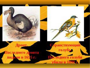 Странствующий голубь. Последнего голубя убили в 1899 г. Дронт. Последнего дро