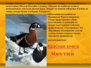 Распространены в тундре и лесотундре Западной Сибири от восточной части полуо