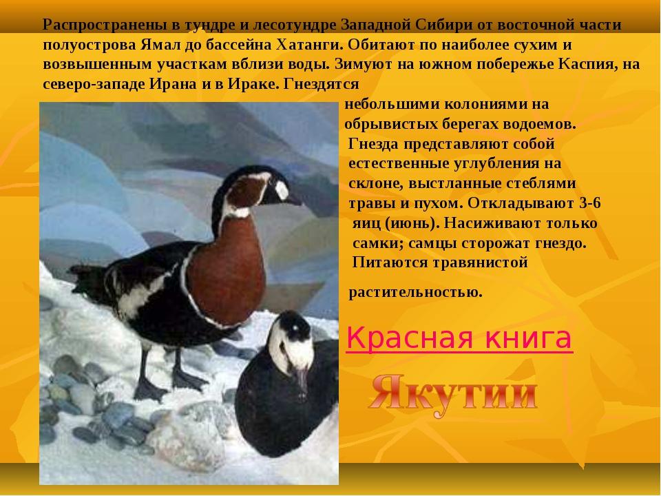 Распространены в тундре и лесотундре Западной Сибири от восточной части полуо...