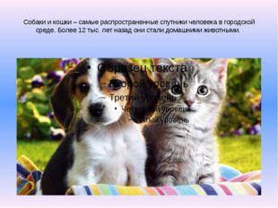 Собаки и кошки – самые распространенные спутники человека в городской среде.
