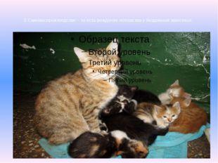 2.Самовоспроизводство – то есть рождение потомства у бездомных животных.