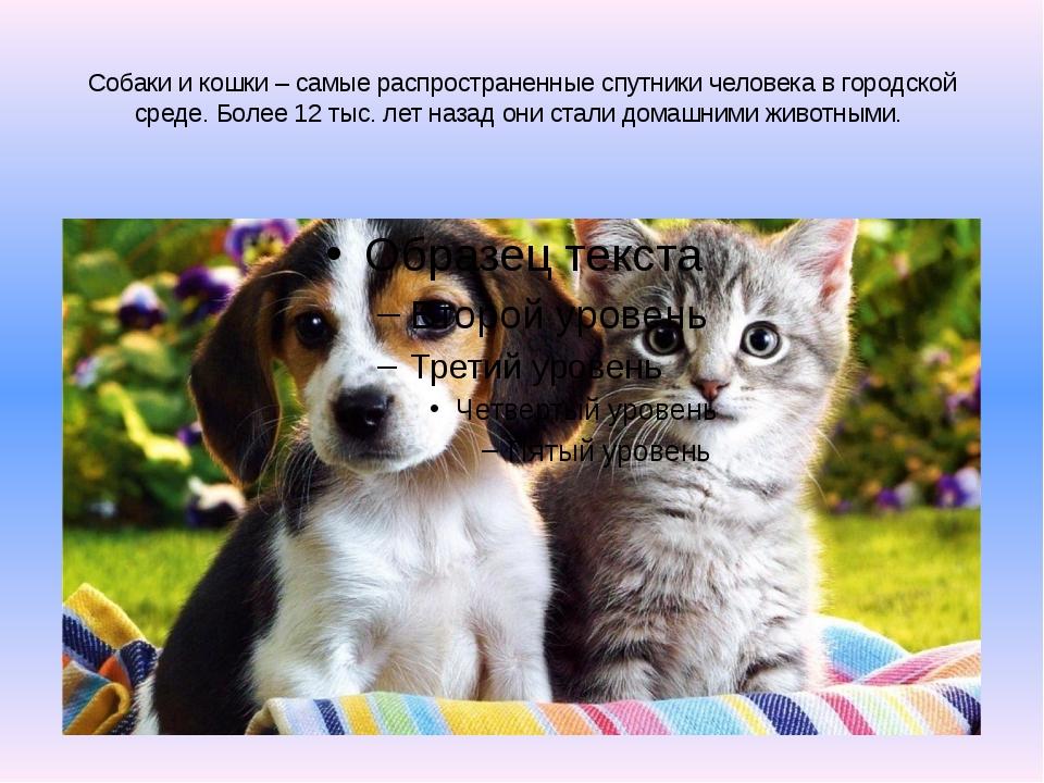 Собаки и кошки – самые распространенные спутники человека в городской среде....