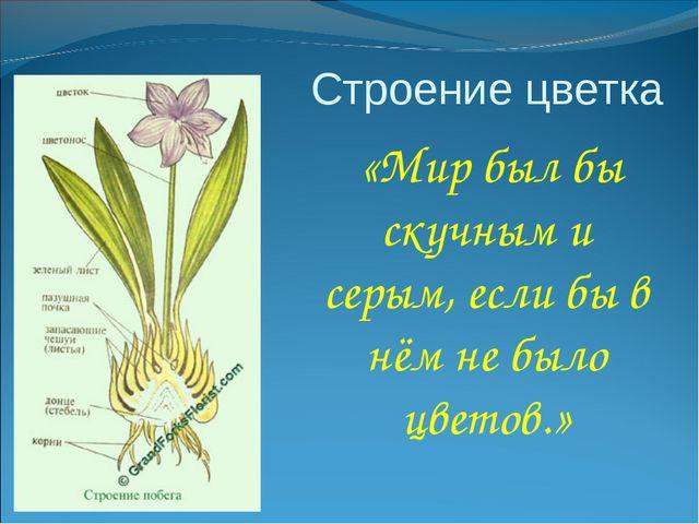 Строение цветка «Мир был бы скучным и серым, если бы в нём не было цветов.»
